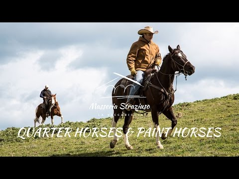 Lazy Luvah: 2011 Bay Roan Overo Stallion from YouTube · High Definition · Duration:  2 minutes 12 seconds  · 54.000+ views · uploaded on 28.12.2014 · uploaded by Superlative Equine