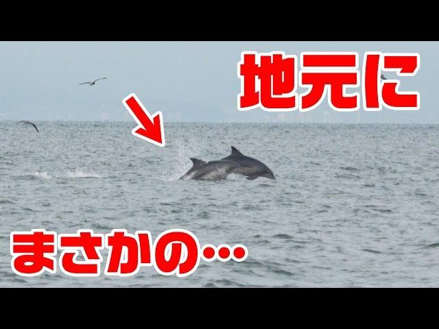【大群発生】そして有明海で大物キス大漁‼