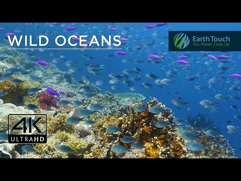 Celebrating World Oceans Day in 4K