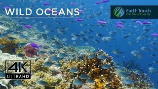 Celebrating World Oceans Day in 4K