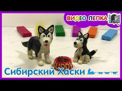 СИБИРСКИЙ ХАСКИ - Лепим собаку из пластилина