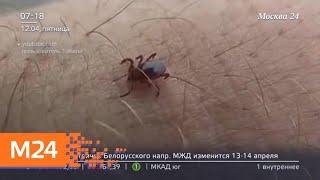 Смотреть видео В столичном регионе начался сезон клещей - Москва 24 онлайн