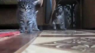Краш-тест котят