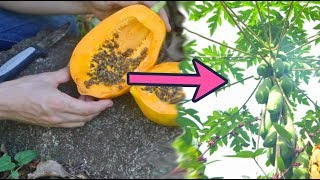 How to Grow 21 Amazing Trees from Seed (Full Presentation)