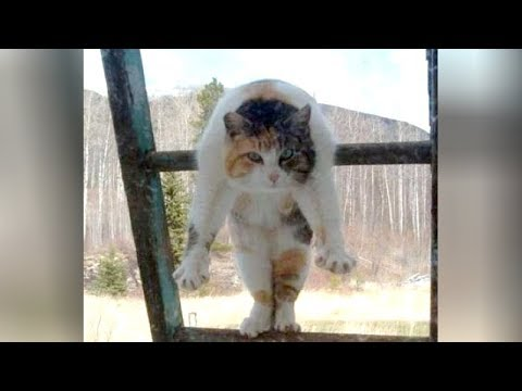 I CAN'T BREATHE! hahaha - Super FUNNY CAT compilation