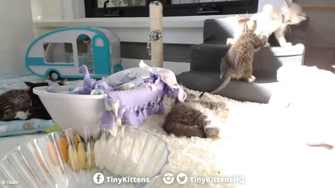 Tiny Kittens Timbit goes thru crack in wall 916 clock & again 918