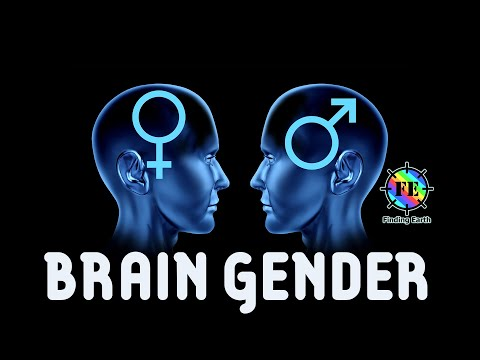 "male brain vs female brain a 5 responses to ""female brain versus male brain"" shawn on november 2, 2012 6:17 am i find this interesting even as a thirteen year old this is so interesting."