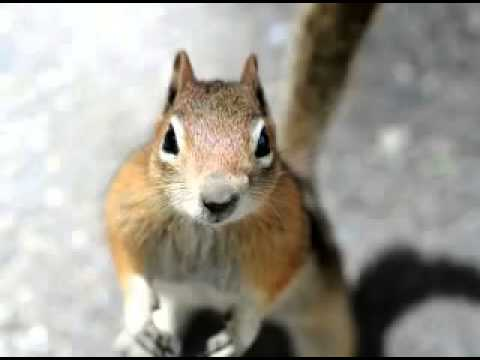 Chipmunk Facts   Facts About Chipmunks