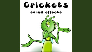 Cricket Chirps Extended