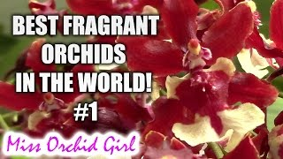 Best fragrant Orchids in the world! #1