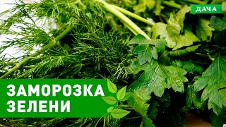Вкусный Сад: ЗАМОРОЗКА ЗЕЛЕНИ НА ЗИМУ