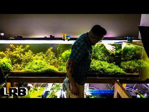 Aquarium Sumps Shrimp Salt Plants Fish And More Corvus Oscen Fish Room Tour