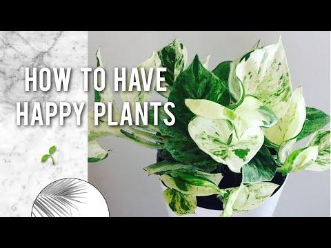 5 BEGINNER TIPS FOR HAPPY HOUSEPLANTS 🌿