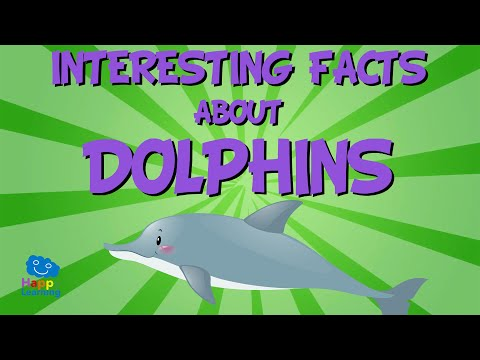 INTERESTING FACTS: DOLPHINS - The Most Curious Marine Mammals!   Educational Videos For Kids