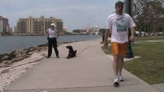 Dog Training Practice Off Lead Using Long-line For Safety May 5, 2010.wmv
