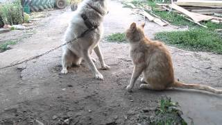 """Кошки против собак"" У них любовь!"