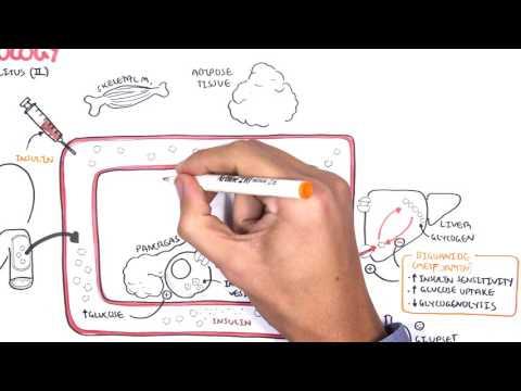 Pharmacology - Diabetes Medication
