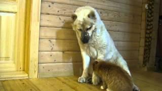 Дружба собаки и кошки! Снисхождение и бесстрашие!