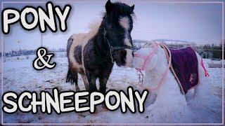 Wie reagiert mein Pony auf das SCHNEEPONY?