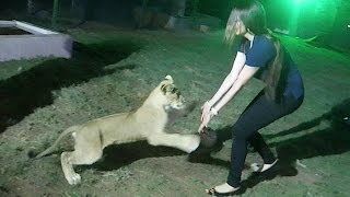 ATTACKED BY A LION IN DUBAI !!
