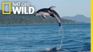 A Showy Dolphin Super-Pod | Destination WILD