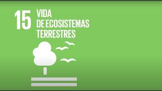 15 Vida de Ecosistemas terrestres -Agenda 2030-