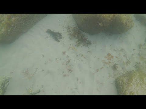 The underwater world of Wreck cove beach