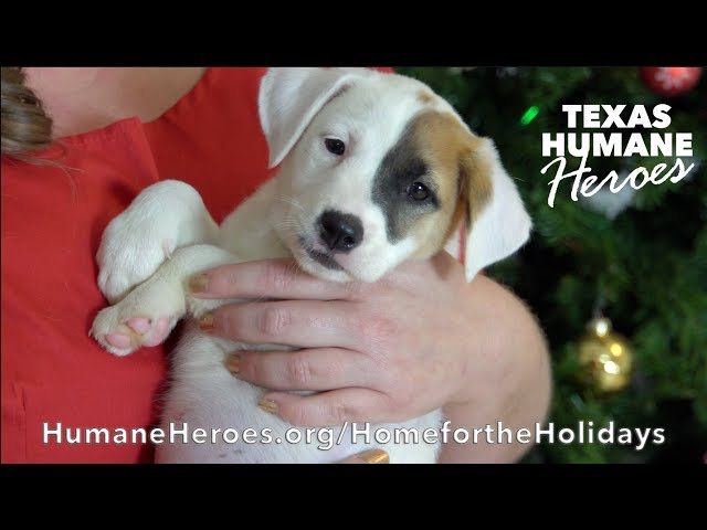 Texas Humane Heroes' Home for the Holidays