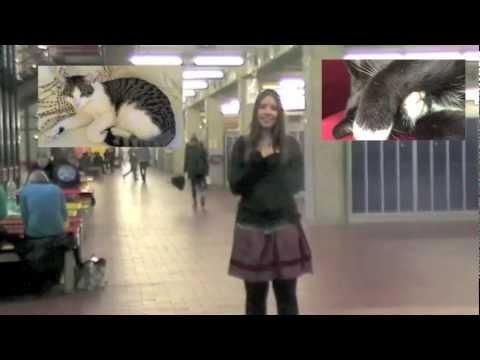 Google im Real Life, Information Retrieval und Katzenvideos