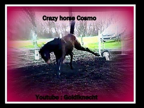 Funny Horses 2017 [Funny Pets] - YouTube |Youtube Pets Funny Horses