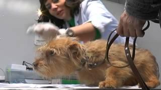 Передвижные ветеринарные кабинеты