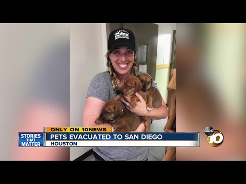 EXCLUSIVE: pets evacuated from Texas to San Diego