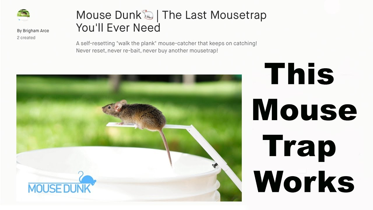 the-mouse-dunk-mouse-trap-invented-by-a-youtube-viewer-works-well-mousetrap-monday