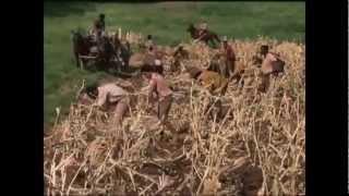 Copper Sun Trailer