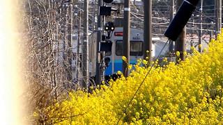 伊豆急下田駅付近の伊豆急行8000系電車