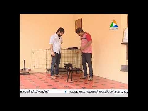 puppy training, handling a puppy