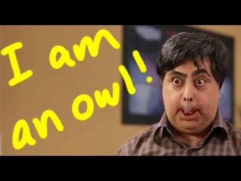 I am an Owl! - Reza shafii jam رضا شفیعی جم جغد