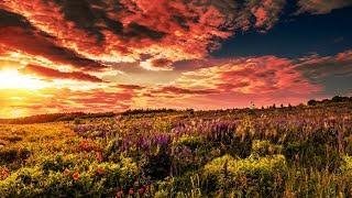 Allen Watts & Alessandra Roncone - The Hymn (Darren Porter Extended Remix)