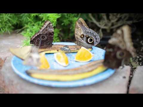 Wheeler Farms-Butterfly House