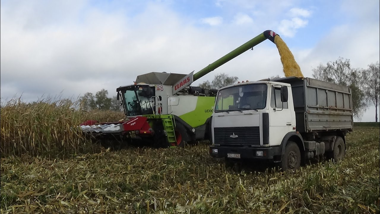"Claas Lexion 770 убирает кукурузу в СПК ""Гигант"""