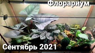 Флорариум в спальне Состояние на сентябрь 2021г