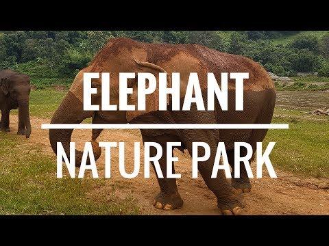 ELEPHANT NATURE PARK - TAILANDIA 🐘🇹🇭| Comiviajeros.com🌍