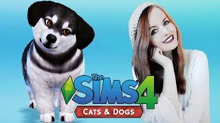MEET FINN | The Sims 4: Cats and Dogs Create A Pet Gameplay Part 1