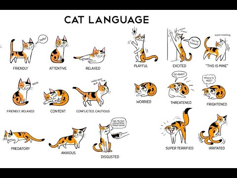 The Meaning Behind Strangest Cat Behaviors || HOW TO UNDERSTAND YOUR CAT BETTER