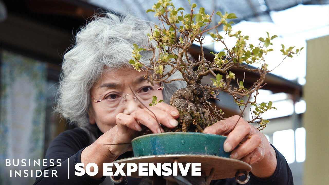 What Makes the Art of Bonsai So Expensive?: $1 Million for a Bonsai Tree, and $32,000 for Bonsai Scissors
