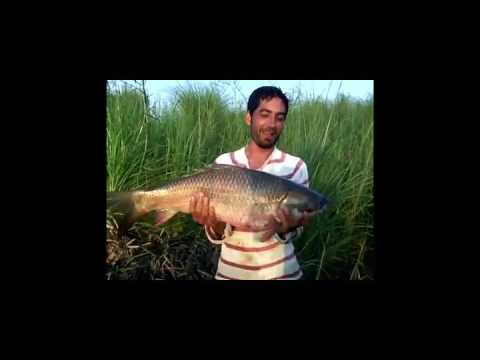 amazing fishing in Pakistan by super sports kahna nau lahore