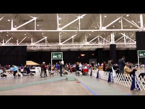 Dec 11, 2014 Keeshond at Crown Classic at IX Center, Cleveland, OH part 3