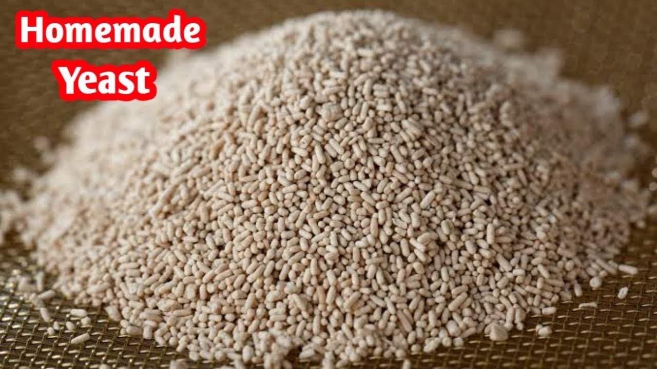 Download ஈஸ்ட் இனி வீட்டிலேயே  செய்யலாம்  how to make yeast at home   DIY    how to make yeast in Tamil
