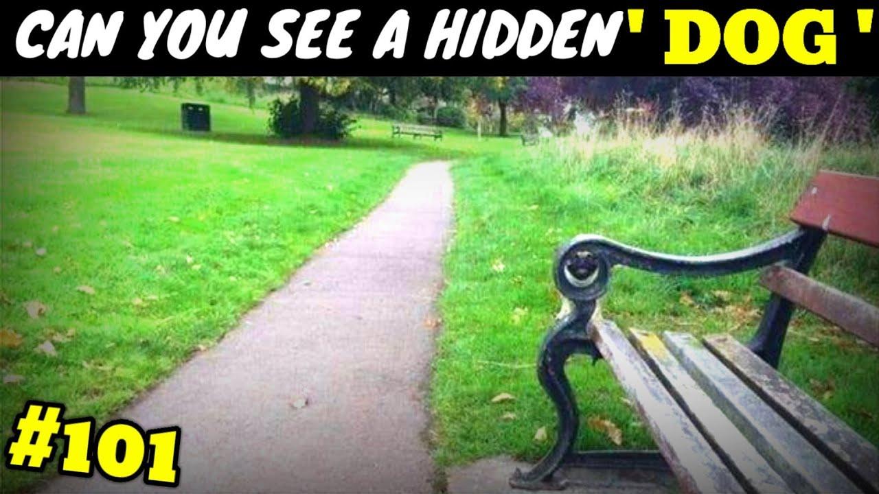 5 most Crazy optical illusion | Historical Hindi #101