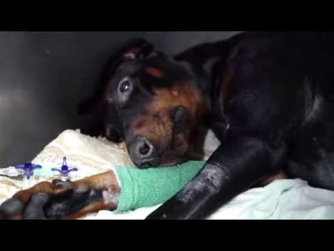 Amazing Dog Rescue and Recovery - Will Bring Tears To Your Eyes